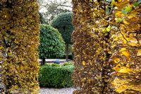 Fagus hedge and topiary - Silverstone Farm, Norfolk