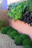 Planting of Buxus, Carex, Heuchera and Alchemilla mollis in 'The Evergreen Classroom' - BBC Gardener's World Live 2010