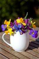 Small white jug with Spring flowers - Dwarf Iris 'Harmony', winter flowering pansies and Narcissus 'Tete a tete'