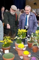 Visitors looking at Narcissus - Alpine Show, Kent, April 2006
