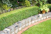 Low wall made from relaimed cobbles with Buxus - Box hedge and raised late summer border beyond with Heuchera and Liriope muscari - Brocklebank Road, Southport, Lancashire NGS
