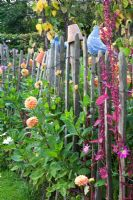 Cottage garden with chestnut fencing and planting of Atriplex hortensis and Dahlia 'Sylvia'
