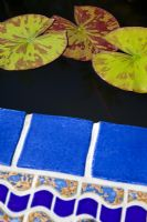 Nymphaea - Waterlily leaves in Moroccan blue tiled pool