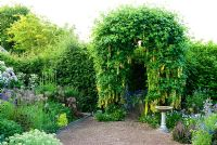 Arch trained with Laburnum waterei 'Vossii' in the front garden surrounded by Viola cornuta, Alliums, Achillea nobilis subsp. neilreichii and Polemoniums - Ivy Croft, Leominster, Herefordshire, UK