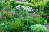 Border of purples and whites includes Papaver orientale 'Patty's Plum', Verbascum phoeniceum 'Violetta', Alliums and Thalictrum - Ivy Croft, Leominster, Herefordshire, UK