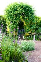 Arch trained with Laburnum waterei 'Vossii' in the front garden - Ivy Croft, Leominster, Herefordshire, UK