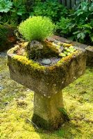 Tufa trough on a plinth - Ivy Croft, Leominster, Herefordshire, UK