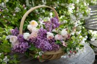 Freshly cut Syringa - Lilac, Tulipa and Malus blossom in in wooden trug
