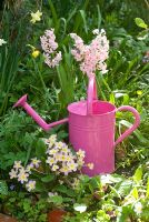 Pink watering can with Hyacinths