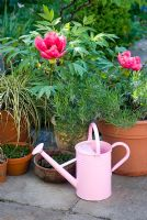 Tree Peony with watering can