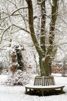 Wooden bench around tree in Winter garden