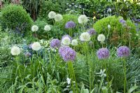 Allium 'Globemaster', Allium 'Mount Everest'