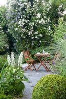 Clematis viticella 'Prinz Charles', Rosa 'Seagull', Salvia sclarea 'Alba', Buxus sempervirens, Miscanthus sinensis 'Morning Light' with seating area