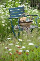 Blue chair in meadow with trug of tools and equipment surrounded by meadow with Leucanthemum vulgare and Centaurea