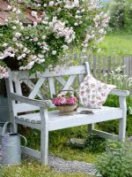 Rosa 'Paul's Himalayan Musk' growing on the roof of garden shed underneath wooden bench with trug of freshly cut Roses
