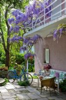 Wisteria sinensis climbing up a balcony from a paved terrace with wicker chair, coffee table and bicycle. Other planting includes Oxalis and Thuja