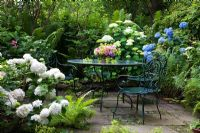 Patio with green metal chairs and table with bouquet. Surrounded by Hydrangea macrophylla, Hydrangea arborescens and Mattheucia struthiopteris in the garden of a Hydrangea collector