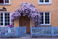Cottage front, Clematis montana