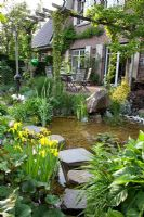 Pond in country garden with stepping stone bridge and planting of Iris pseudacorus, Ligularia dentata in foreground. Hedera - Ivy and Vitis vinifera - Grape Vine growing on pergola over patio