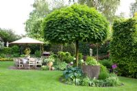 Country garden with patio. Clipped Acer platanoides 'Globosum' - Norway Maple tree in island bed and Carpinus betulus - Hornbeam hedge