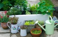 Group of containers, including butler sink planted with  herbs and watering can