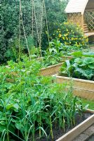 Vegetable beds with garlic, potatoes, artichokes, pumpkins and runner beans