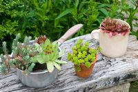 Succulents in unusual containers