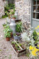 Trevoole Farm, Cornwall. Container planting outside back door of farmhouse