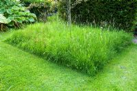 An area of lawn left to grow wild flowers and attract beneficial insects