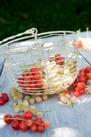 Red and white currants displayed in wire basket on table