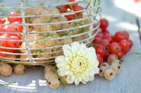 Red and white currants displayed in wire basket with cut Dahlia