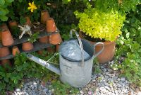 Golden Marjoram in pot with watering can and clay pots