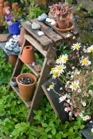 Terracotta pots on old wooden steps with Leucanthemum vulgare  - Ox eye Daisies
