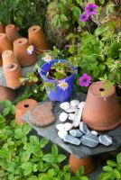 Old terracotta pots on slate shelf with purple bucket, pebbles and sea shells. Geranium 'Anne Folkard'