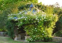 Gazebo smothered in white climbing Rosa