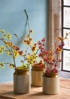 hamamelis 'anne', 'coombe wood', japonica var megalophylla', 'angelly', 'aphrodite', 'gingerbread', 'glowing embers', 'rubin', 'foxy lady' and 'magic fire', in stone jars on windowsill