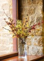 Hamamelis 'Anne', 'Coombe Wood', japonica var megalophylla, 'Angelly', 'Aphrodite', 'Gingerbread', 'Glowing Embers', 'Rubin', 'Foxy Lady' and 'Magic fire' in glass vase on windowsill