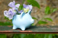 Lathyrus 'Chatsworth'. Sweet peas in blue china pig vase