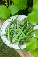 Runner bean 'White Lady' on old enamel plate