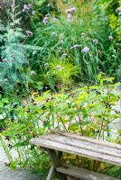 Wooden seat with Hypericum perforatum and Verbena bonariensis