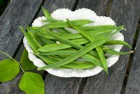Runner bean 'White Lady' on china plate