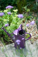 Purple watering can with Verbena bonariensis and Sedum spectabile