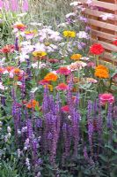 Hot mixed summer border by fence