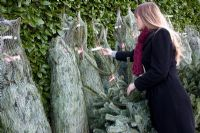 Woman buying Christmas Tree (Abies nordmanniana) in garden centre