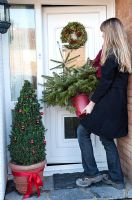 Woman buying Christmas Tree, bringing potted Nordman Fir (Abies nordmanniana) into house