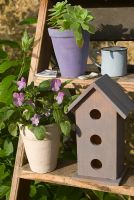 Viola 'Sorbet Lavender Ice' in pot on steps with birdhouse