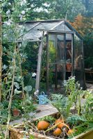 Vegetable beds with Pumpkin 'Mars', Borage, Artichokes  and Sweetpeas with wooden greenhouse behind