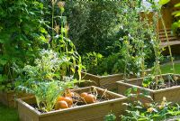 Autumn vegetable beds with Pumpkins, Borage and Sweetcorn