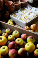 Storing apples, stored in wooden trays, with tissue to protect against rot transmission, in frost free shed