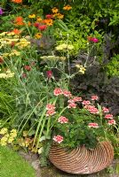Herbaceous border in August with Crocosmia masoniorum, Monarda 'Gardenview Scarlet', Helenium 'Sahins Early Flowerer', Actaea 'James Compton', Lychnis coronaria, Achillea and Geranium growing from Gordon Cooke stoneware pot at - Hill Top Avenue, Cheshire NGS